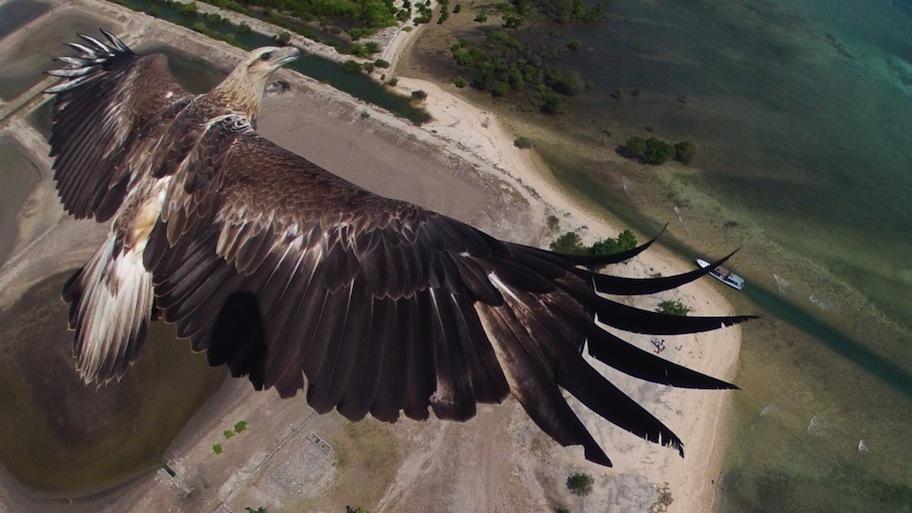 PRIMER PREMIO para National Geographic: Parque Nacional de Barat en Indonesia (@capungaero)
