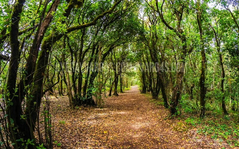 Blog de Lugarte Fotografía © Varg4s.com: Las fotografías de Yeray Vargas