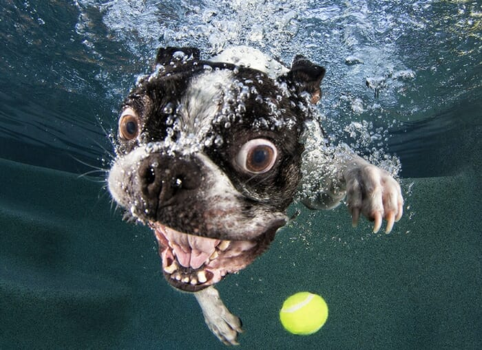 Blog de Lugarte Fotografía © Seth Casteel: perros bajo el agua